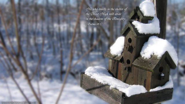 winter-bird-house